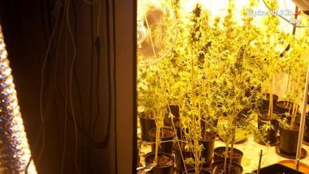 Ponad 27 tys. porcji narkotyków nie trafi na czarny rynek