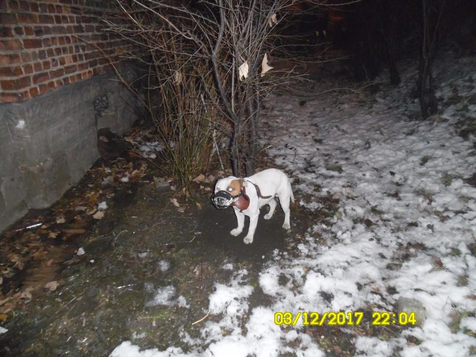 Przywiązany do drzewa szczeniak trafił do schroniska